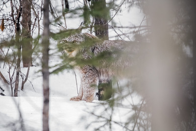 OWL_2847