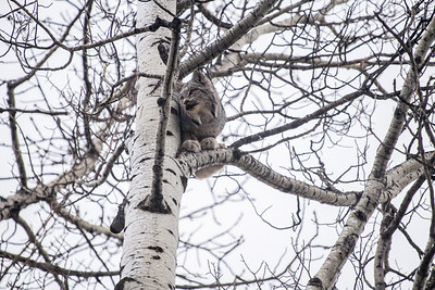 OWL_2985