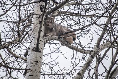 OWL_2947