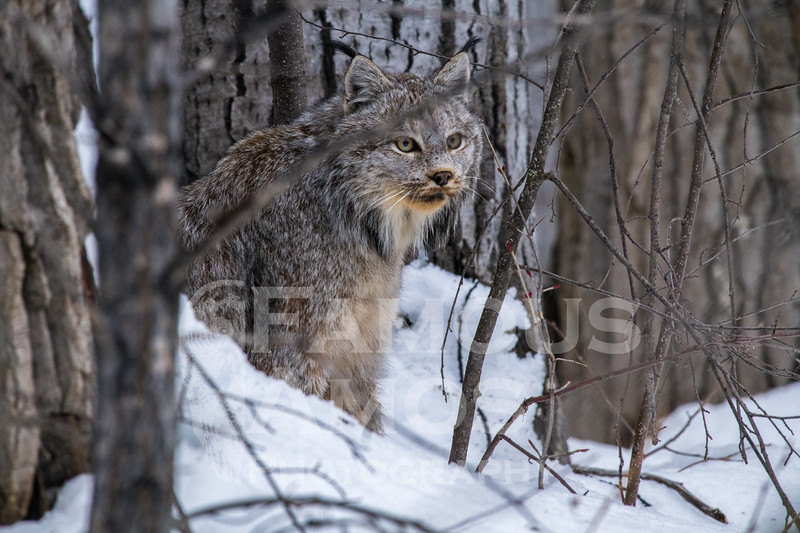 OWL_3212