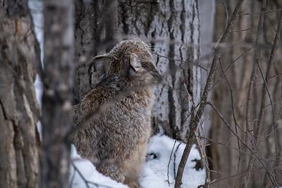 OWL_3210