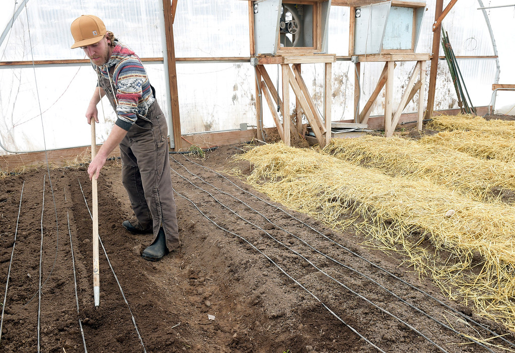 . LYONS, CO - MARCH 6: Head grower Grant Hamil covers seeds with soil after planting them in a greenhouse at the Lyons Farmette March 6, 2019. (Photo by Lewis Geyer/Staff Photographer)