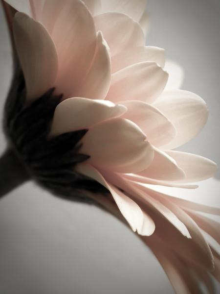 Fleurs_Flowers