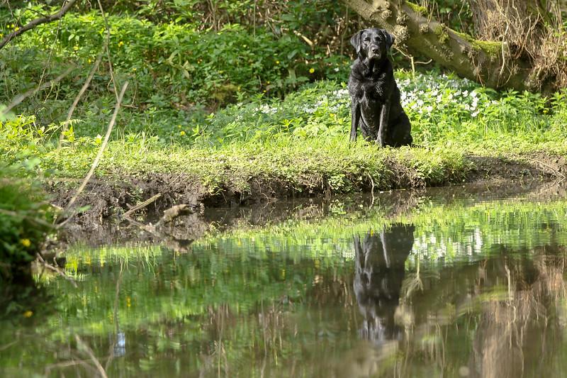 Bluebell Shoot Matlock Derbyshire - Ena Williams