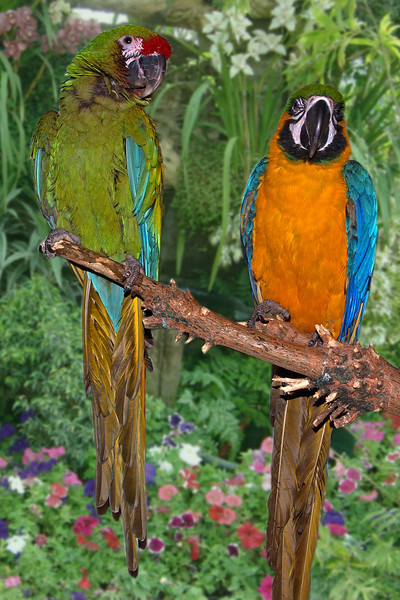 Dukes birds