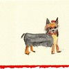 """Dog"" -- Artist: Michealyn Kvasnik - - - Medium: Watercolor Pencil"