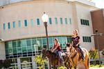 M19210- Horses on Campus-3298