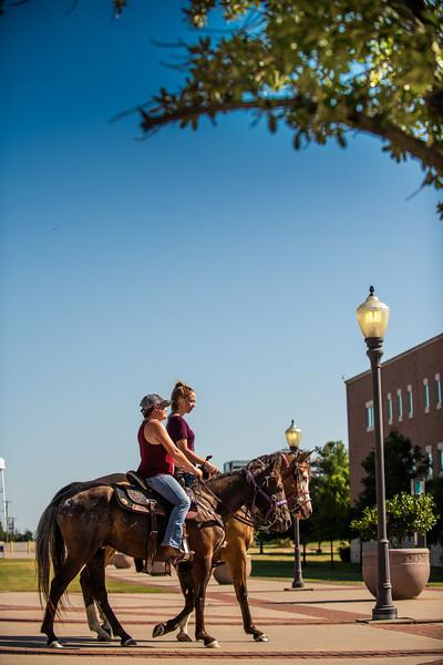 M19210- Horses on Campus-3293