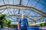 M21063- Greenhouse, Lettuce Harvesting-6899