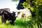 M21064- Ag Farm Animals -7737