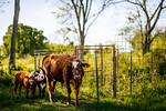 M21064- Ag Farm Animals -7839