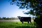 M21064- Ag Farm Animals -7791