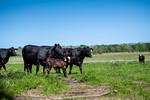 M21064- Ag Farm Animals -7651