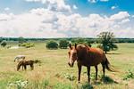 M21101- Agriculture Farm-2151