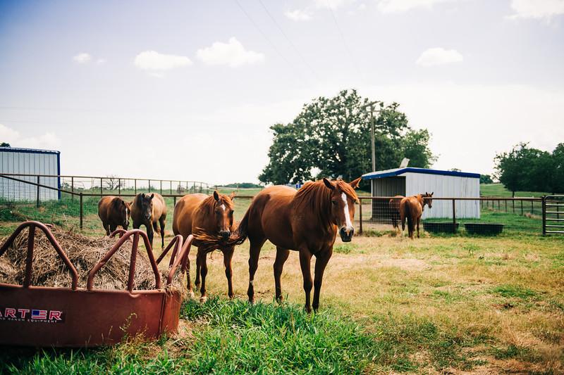 M21101- Agriculture Farm-2348