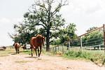 M21101- Agriculture Farm-2349
