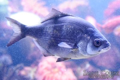 Fish at the New England Aquarium.