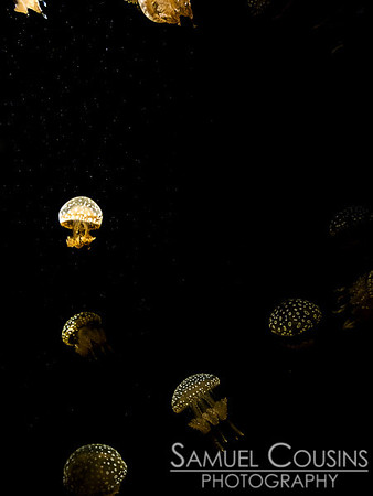 Jellyfish at the New England Aquarium.