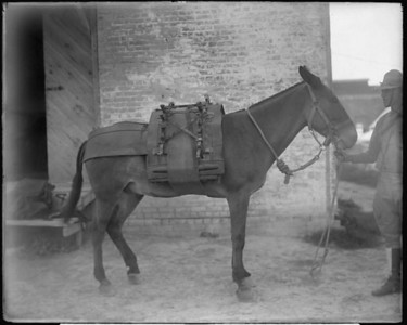 HORSE/MULE PACKS