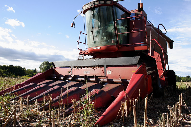 Red Combine in Corn Field After harvest