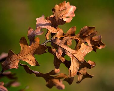 Leaves & Grasses