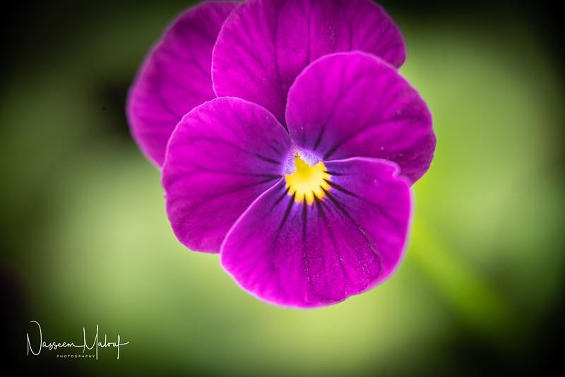Flowers (DD) 0220-114.jpg
