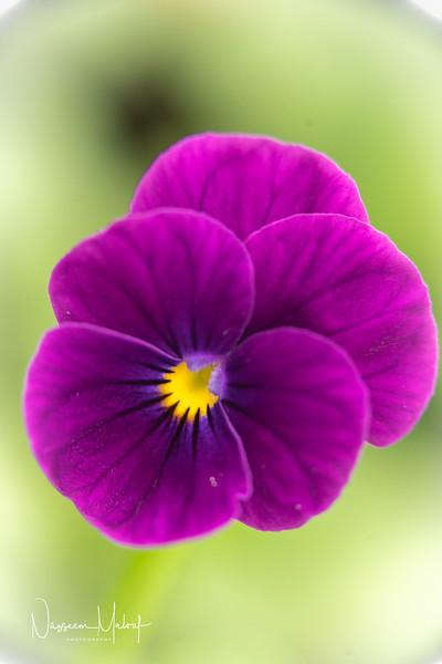 Flowers (DD) 0220-111.jpg