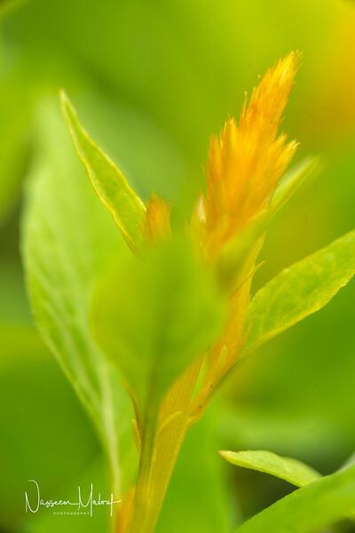 Flowers (DD) 0220-138.jpg