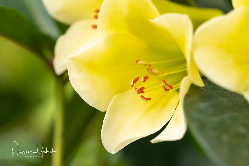 Flowers (DD) 0220-51.jpg