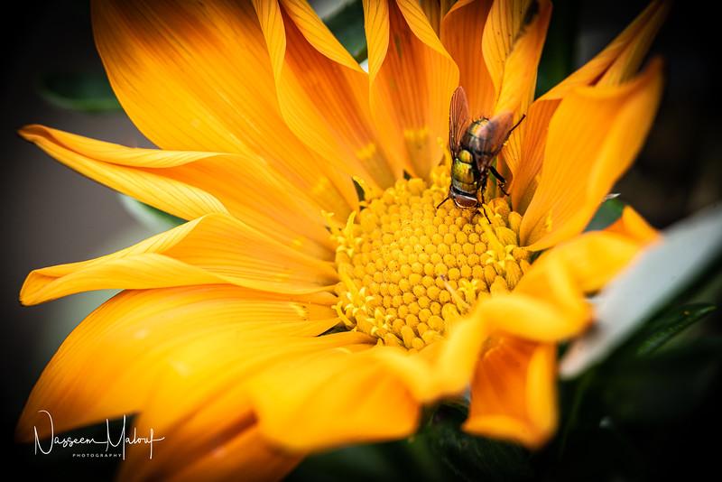 Flowers (DD) 0220-277.jpg