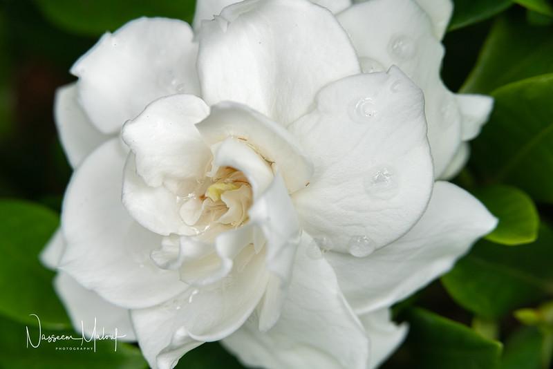 Flowers (DD) 0220-163.jpg