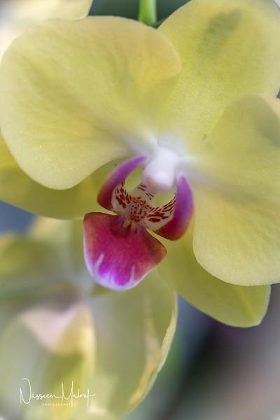 Flowers (DD) 0220-396.jpg