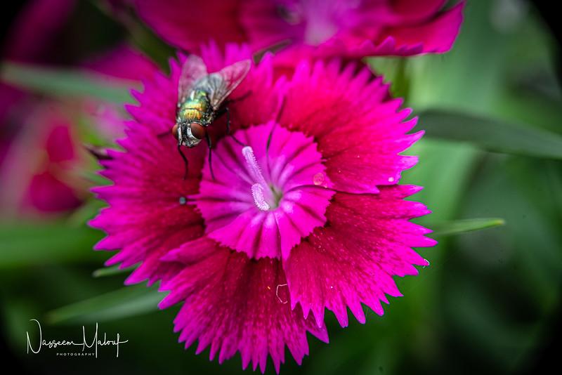 Flowers (DD) 0220-301.jpg