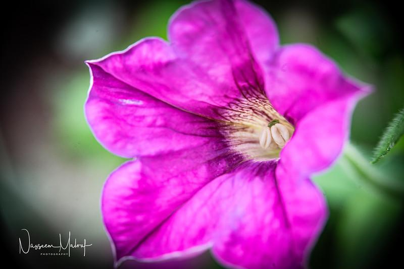 Flowers (DD) 0220-290.jpg