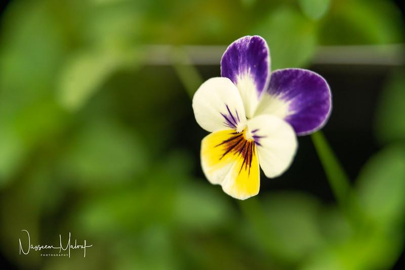 Flowers (DD) 0220-99.jpg