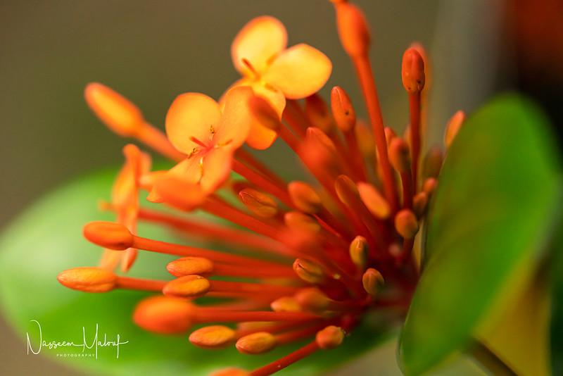 Flowers (DD) 0220-43.jpg