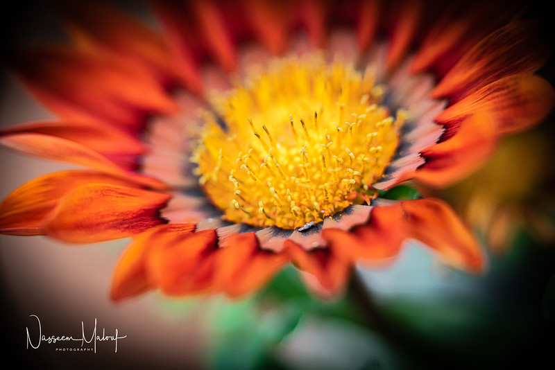Flowers (DD) 0220-264.jpg