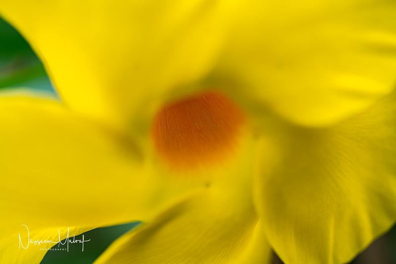 Flowers (DD) 0220-181.jpg