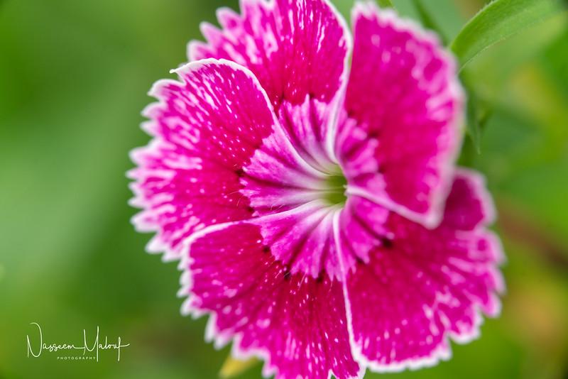 Flowers (DD) 0220-149.jpg