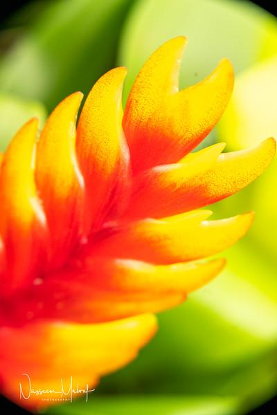 Flowers (DD) 0220-95.jpg