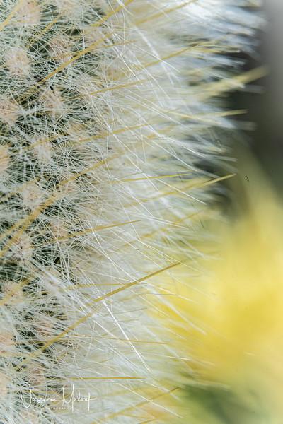 Flowers (DD) 0220-261.jpg