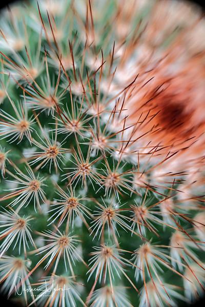Flowers (DD) 0220-252.jpg