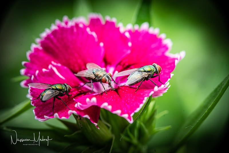 Flowers (DD) 0220-314.jpg
