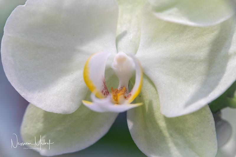 Flowers (DD) 0220-400.jpg