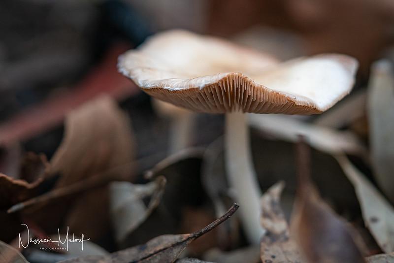 Macro Mushrooms  (DD) 0220-31.jpg