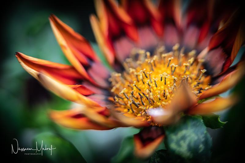 Flowers (DD) 0220-266.jpg