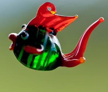 fish DSC_5972a