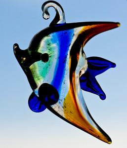 fish DSC_5965a