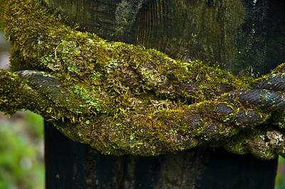 Moss covered rope on post
