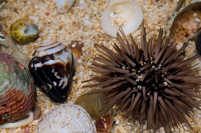 small spiny sea creatures